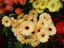 Beautifu colorful flowers solt at a street Royalty Free Stock Images
