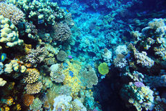 Beautifu coral reef. Underwater photo Stock Images
