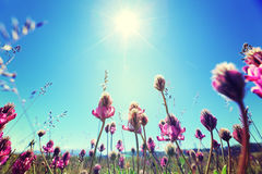 Beautifu flowers under blue sky Stock Photography