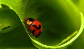 Beautiful beetle in malaysia stock images