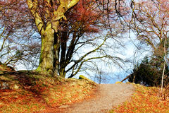 Beautifu road. Beautiful road in autumn park with blue sky Stock Photos