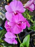 BeautifulOrchid†‹tropische flower†‹plant†‹ stock afbeelding