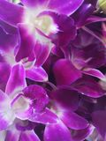 Beautiful†‹orchid†‹flower†‹garden†‹decoration†‹ obrazy stock