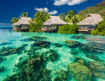 Beautiful above and underwater landscape of a tropical resort. Beautiful above and underwater coral landscape of a tropical resort Stock Photo