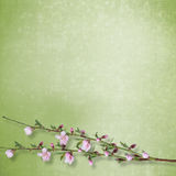 Beautiful abstract background with branch. Of Sakura vector illustration