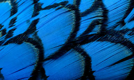 Beautiful abstract background  feathers Stock Image