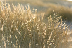 Beautiful abstract background grass texture on sunset Royalty Free Stock Photo