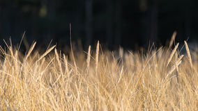 Beautiful abstract background grass texture on sunset Stock Photography