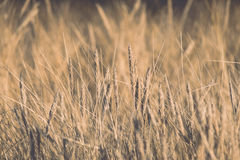 Beautiful abstract background grass texture on sunset - vintage Stock Photos