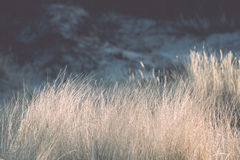 Beautiful abstract background grass texture on sunset - vintage Stock Image