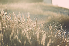 Beautiful abstract background grass texture on sunset - vintage Royalty Free Stock Photos