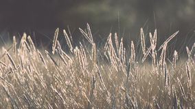 Beautiful abstract background grass texture on sunset - vintage Stock Images