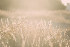 Beautiful abstract background grass texture on sunset - vintage Stock Photo