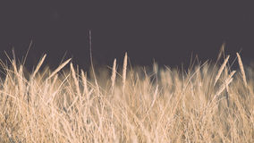 Beautiful abstract background grass texture on sunset - vintage Royalty Free Stock Photography