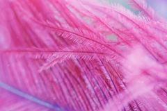 Beautiful abstract background with purple feather. Royalty Free Stock Photography