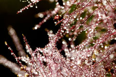 Beautiful abstract, bokeh of water drops on a plant Royalty Free Stock Image