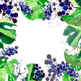Beautiful abstract bright pattern of blue grapes and green leaves made with watercolors and pen with splashes and drops frame Stock Image