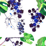 Beautiful abstract bright pattern of grapes and leaves made with. Watercolors and pen with splashes and drops seamless pattern hand sketch Royalty Free Stock Images