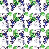 Beautiful abstract bright pattern of grapes and leaves made with. Watercolors and pen with spray and blobs hand sketch Royalty Free Stock Photography