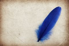 Beautiful abstract color blue feather on the brown and white isolated background and wallpaper stock image