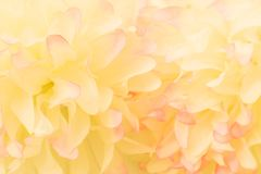 Beautiful abstract color pink and yellow flowers on white background and pink flower frame and white orange leaves texture backgro