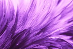 Free Beautiful Abstract Colorful Blue Black Red And Pink Feathers On Dark Background And Soft White Purple Feather Texture On White Pat Stock Photos - 163324253