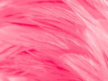 Beautiful abstract colorful white and pink feathers on white background and soft white feather texture on white pattern and pink