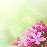 Beautiful abstract floral background royalty free stock photography