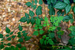 Beautiful abstract green leaves selective focus use for background Royalty Free Stock Photos