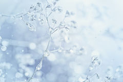 Beautiful abstract light and blurred soft background with flower Stock Images
