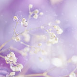 Beautiful abstract light and blurred soft background with flower. S in purple color. Close-up of of many dew drops or rain water on the dry flower. Elegant and Royalty Free Stock Photos