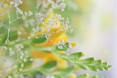 Beautiful abstract light and blurred soft background with flower Stock Photos