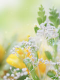 Beautiful abstract light and blurred soft background with flower Royalty Free Stock Image