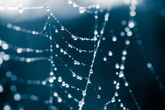 A beautiful, abstract, monochrome shallow depth of field photo of a spider net with water droplets. In a summer morning Stock Photos