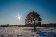 Beautiful abstract nature landscape of a tree in a field under the sun shine, star shape. Tree is in the snowy field. The morning nature scene of sunrise and Royalty Free Stock Images