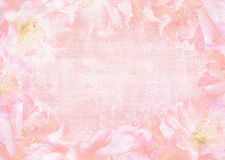 Beautiful abstract roses background with place for your text Royalty Free Stock Images