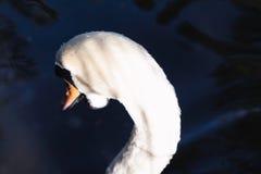Beautiful abstract surreal white swan looking away at deep dark royalty free stock photography