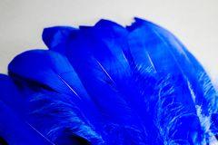 Beautiful abstract texture color blue feathers on the white isolated background and pattern wallpaper. Art stock photo