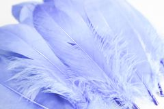 Beautiful abstract texture color blue and white feathers on the white isolated background and pattern wallpaper. Art stock photography