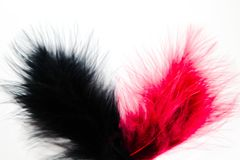 Beautiful abstract texture color red pink and back feathers on the white isolated background and pattern wallpaper. Art stock photography