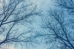 Beautiful abstract tree naked branches intertwined Royalty Free Stock Photos