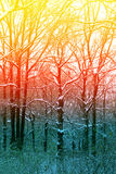 Beautiful abstract winter forest Stock Images