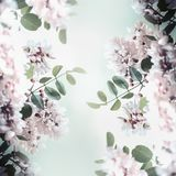 Beautiful acacia blossom frame, spring and summer nature royalty free stock images