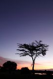Beautiful Acacia tree at Sunrise Royalty Free Stock Images