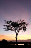 A beautiful acacia tree and a waterhole during sunrise Royalty Free Stock Photos