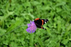 Beautiful Admiral butterfly Royalty Free Stock Images