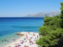 Beautiful Adriatic Sea bay with pines in Croatia Stock Image