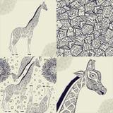 Beautiful adult Giraffe. Hand drawn Illustration of ornamental giraffe.  giraffe on white background. Seamless Royalty Free Stock Photography