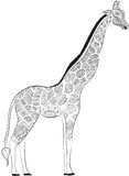 Beautiful adult Giraffe. Hand drawn Illustration of ornamental giraffe.  isolated giraffe on white background. The head of an orna Stock Photography