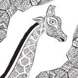 Beautiful adult Giraffe. Hand drawn Illustration of ornamental giraffe.  Stock Photography